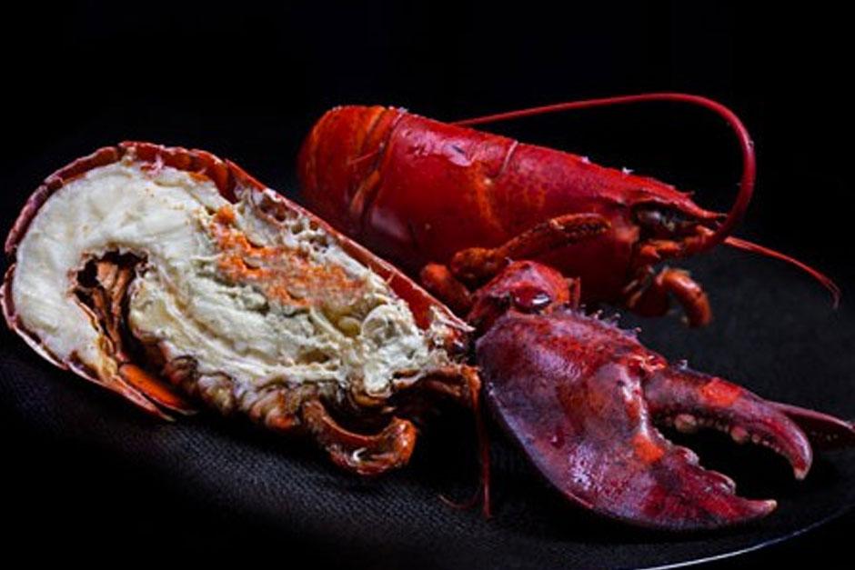 photo d'un homard