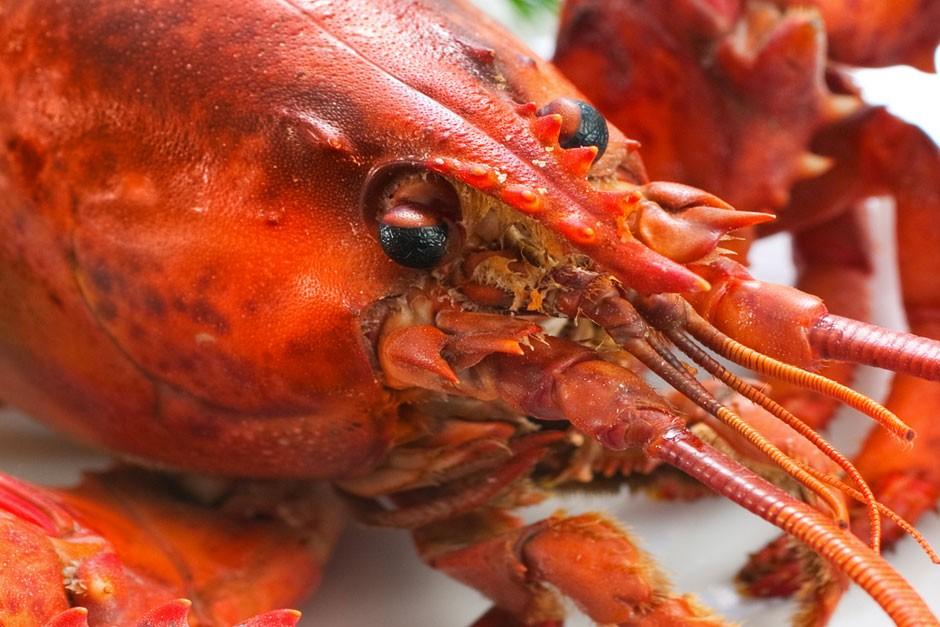 photo du homard le plus cher du monde