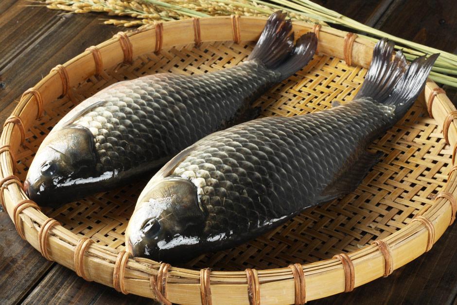 image d'illustration sur les restaurants de poissons frais à Paris